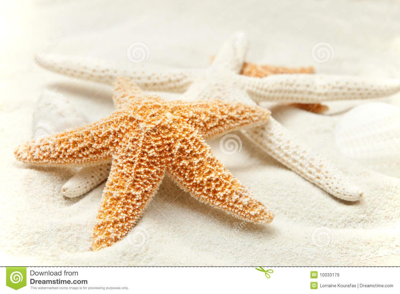 Sabbia Molle Della Spiaggia Con Una Stella Marina Immagini Stock.