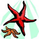Stelle marine, clip art di animali stella marina.