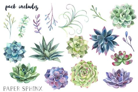 Watercolor Succulents Clipart.