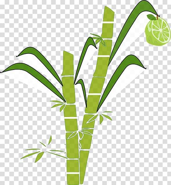 Pongal Sugarcane , Cane transparent background PNG clipart.