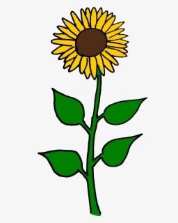 Free Sun Flower Clip Art with No Background.