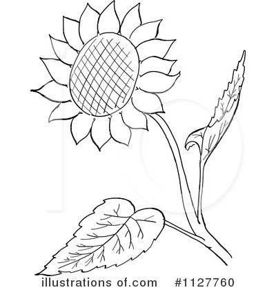 black and white sunflower clipart.