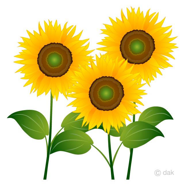 Free Three Sunflowers Clipart Image|Illustoon.