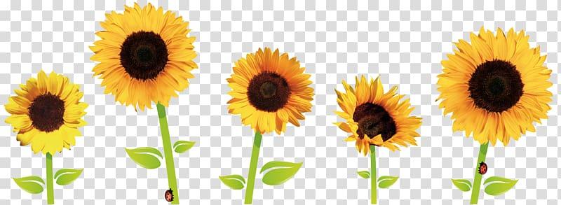 Five yellow sunflowers illustration, Common sunflower.