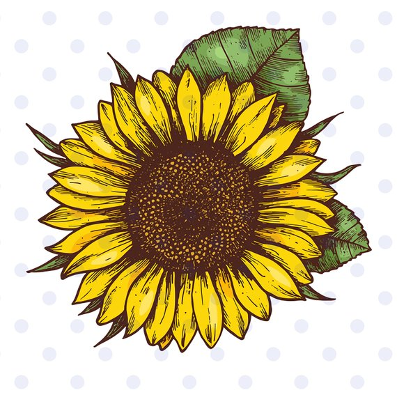 sunflower, sunflower svg, sunflower clipart, sun svg, flower.