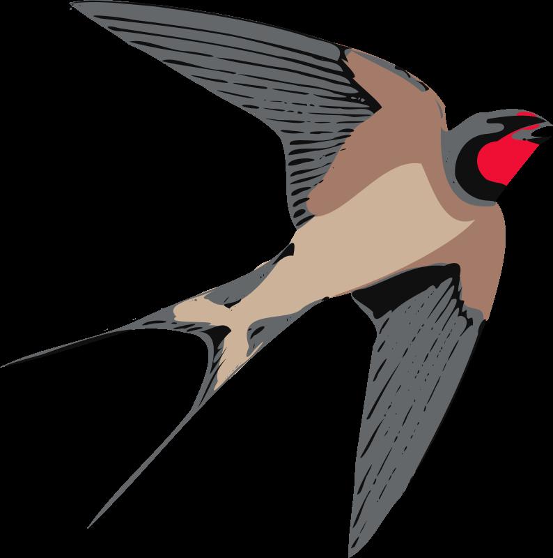 Free Swallow Cliparts, Download Free Clip Art, Free Clip Art.