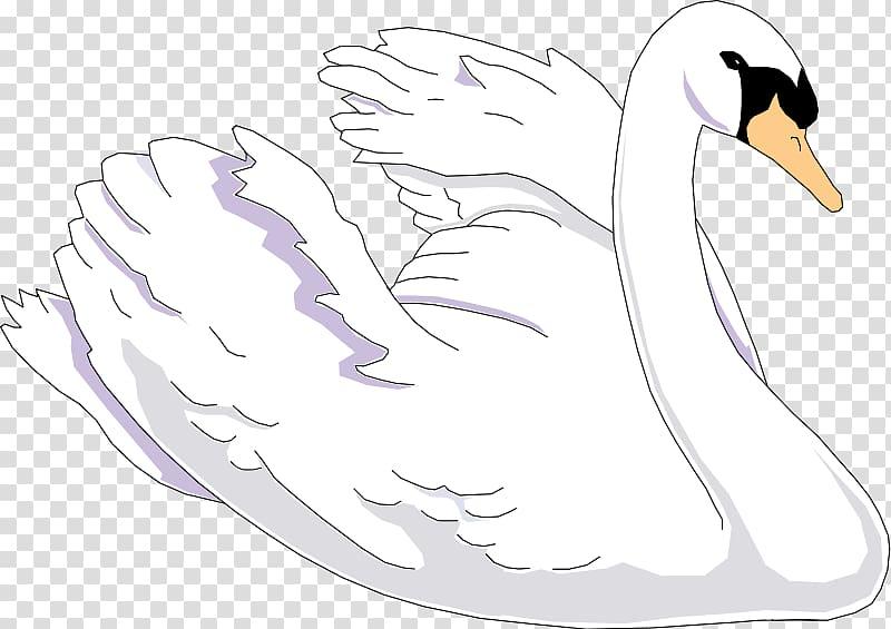 Black swan , swan transparent background PNG clipart.