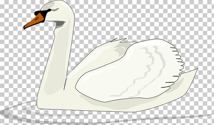 Black swan Bird , White goose PNG clipart.