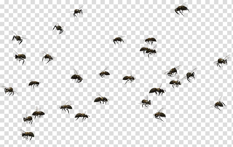 Swarm of bees, Honey bee Swarming Insect , bees transparent.