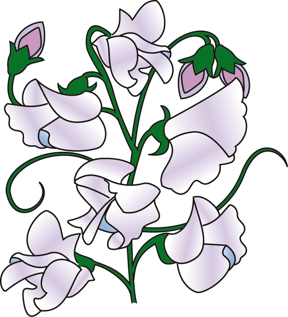Free Sweet Pea Cliparts, Download Free Clip Art, Free Clip.