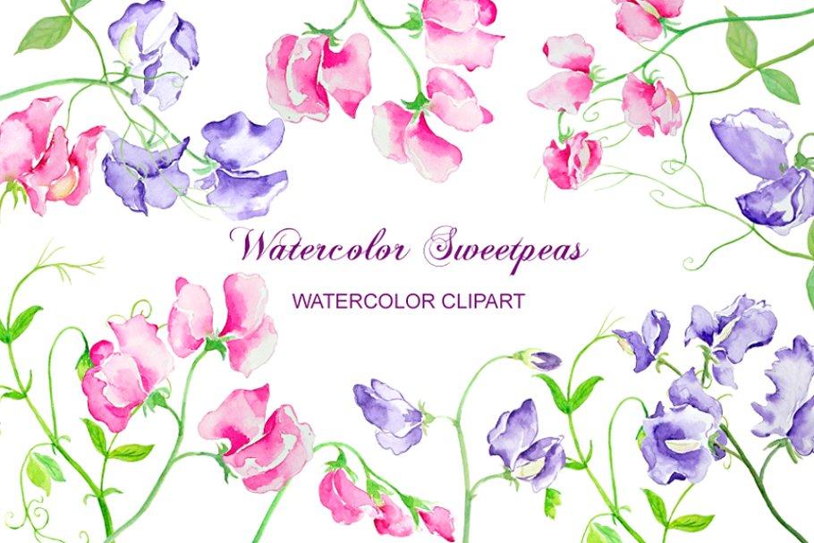 Watercolor Sweet Pea Flowers.