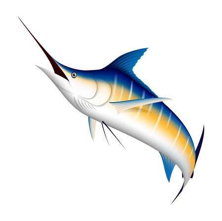 1,696 Swordfish Stock Illustrations, Cliparts And Royalty Free.