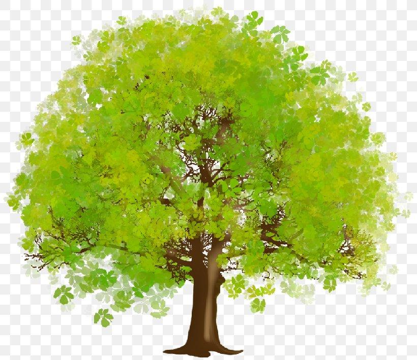 Tree Desktop Wallpaper Clip Art, PNG, 819x709px, Tree.