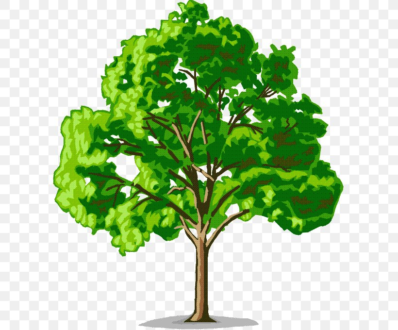 Tree American Elm Cedar Elm Clip Art, PNG, 601x680px, Tree.