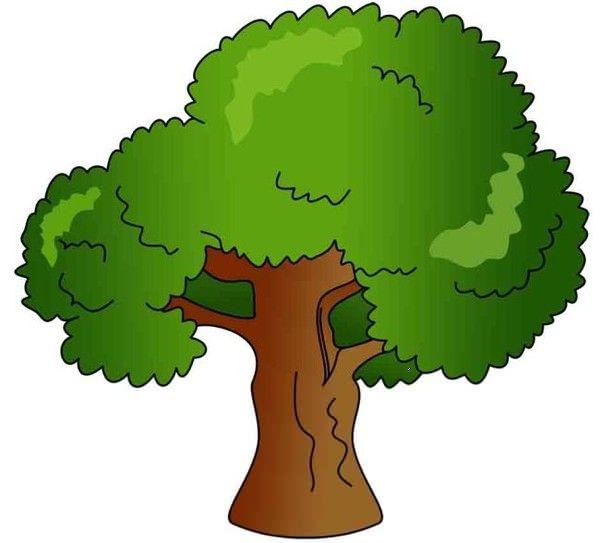 Sycamore Tree Clipart.