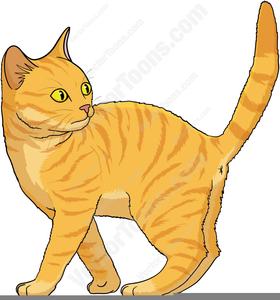 Free Clipart Tabby Cat.