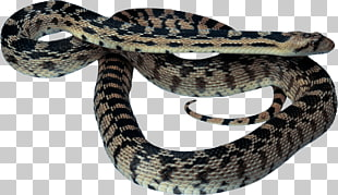 25 taipan PNG cliparts for free download.
