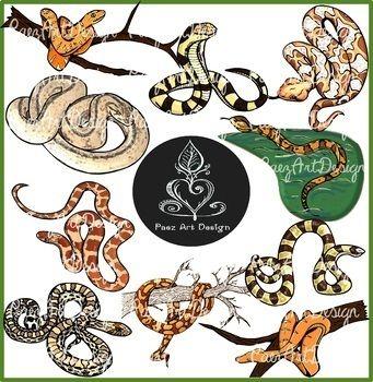 Snake Types CLIPART Bundle 104 Images Total! {Paez Art.