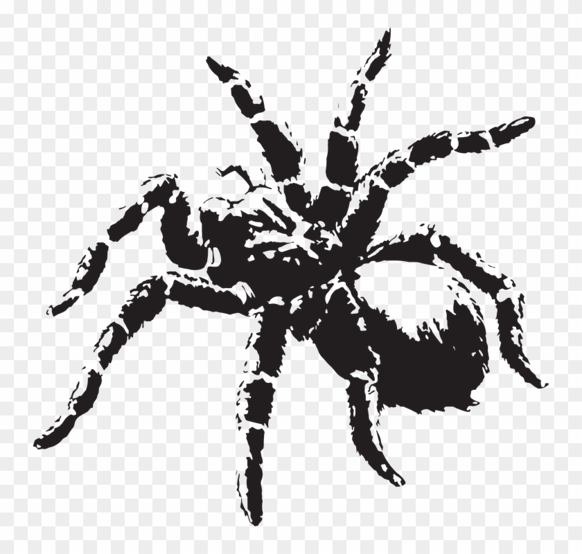 Creepy Clipart Scary Spider.