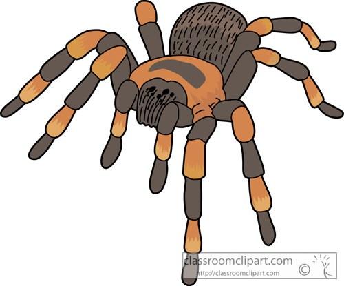 Tarantula spider » Clipart Portal.