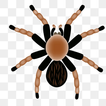Tarantula Png, Vector, PSD, and Clipart With Transparent Background.