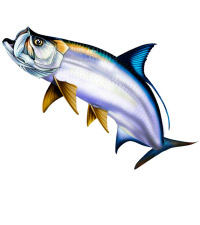 Published On August 13 2015 In Tarpon Clipart Illustration.