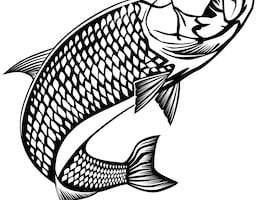 Tarpon clipart 1 » Clipart Station.
