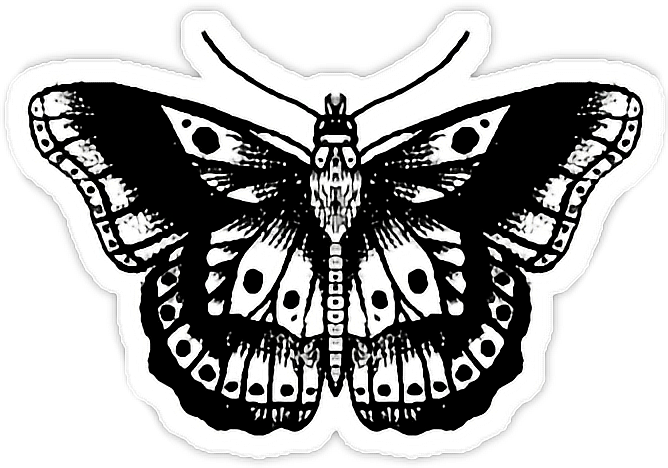 Tattoo Image Butterfly Model Drawing.