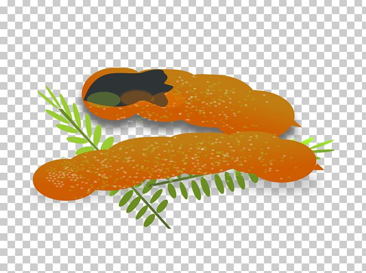 Tamarind PNG, Clipart, Big Leaves, Carrot, Clip Art, Drawing.