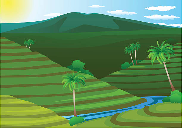 Vector illustration of terrace rice field » Clipart Station.