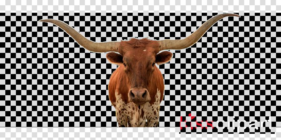 horn texas longhorn terrestrial animal bovine snout clipart.