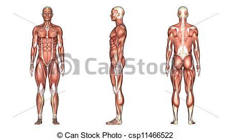 Clip Art of human body.