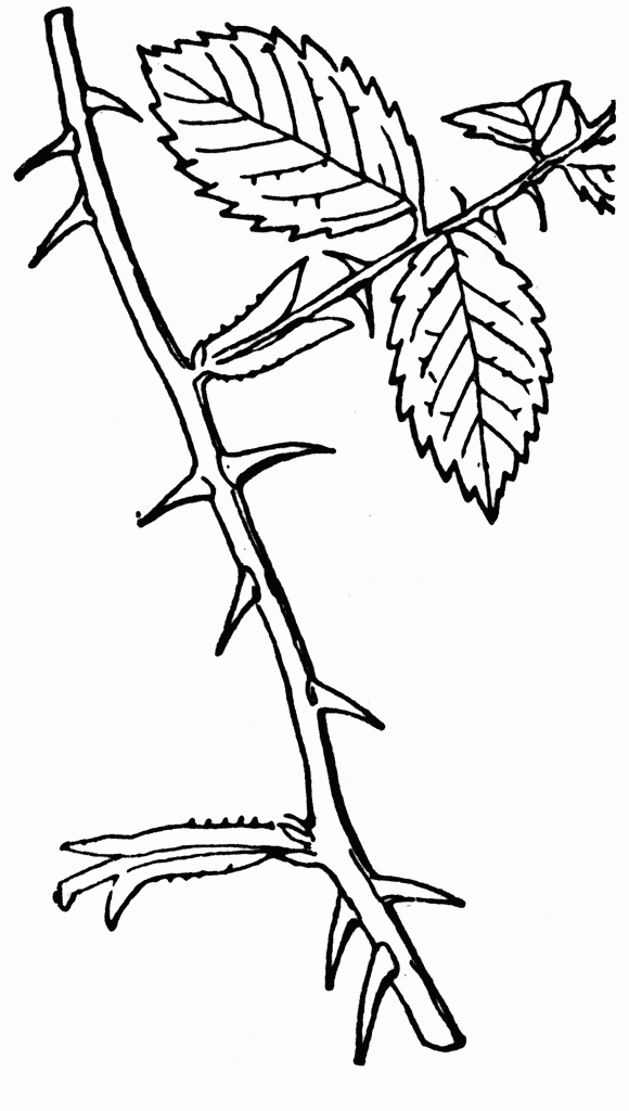 Thorn Clipart Black And White.