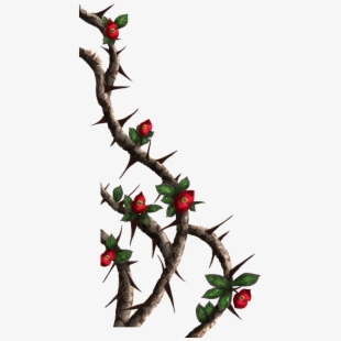 Thorn Vine Png #461384.
