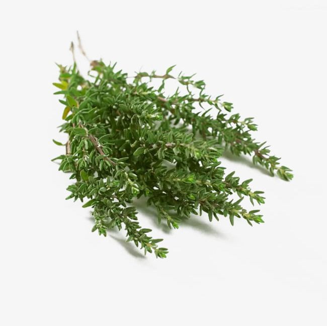 Creative Thyme PNG, Clipart, Creative Clipart, Creative.
