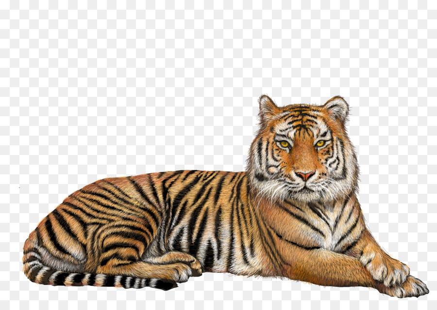 Bengal tiger Lion Clip art.