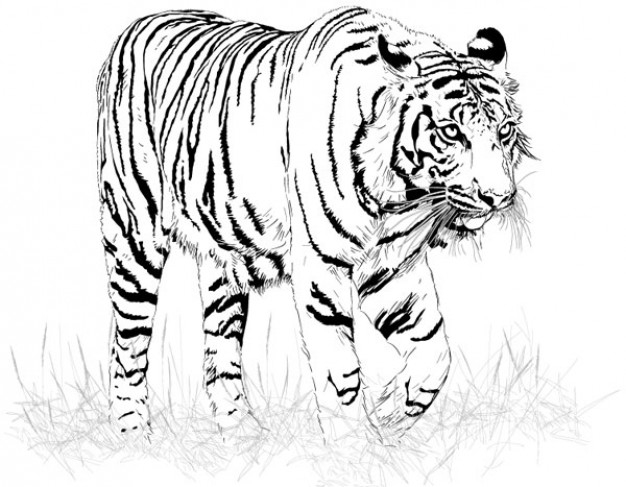 Black and white tiger silhouette.
