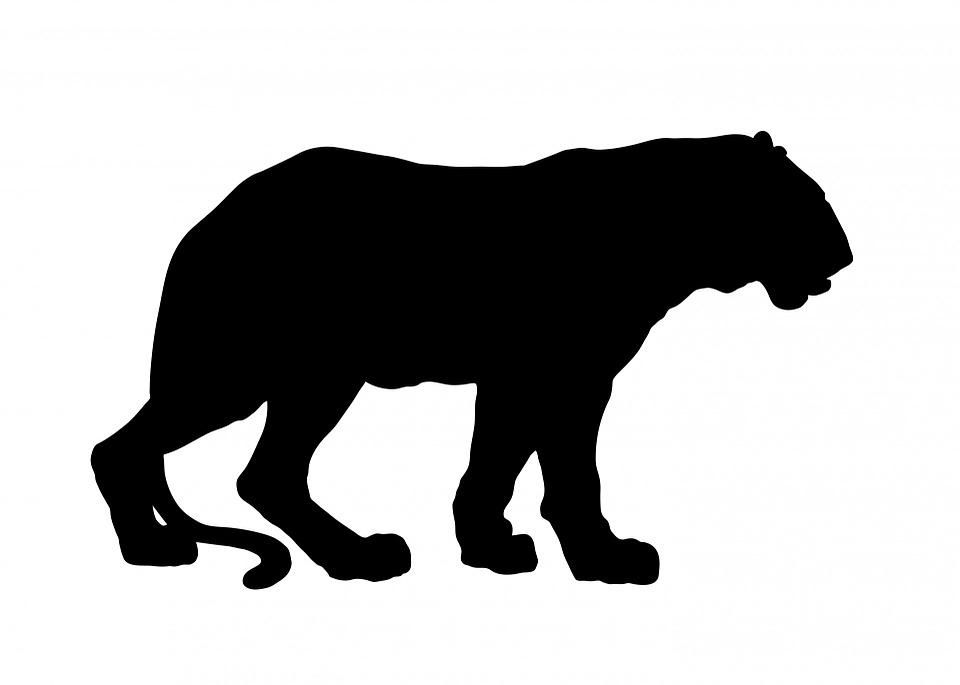 Free illustration: Tiger, Animal, Black, Silhouette.