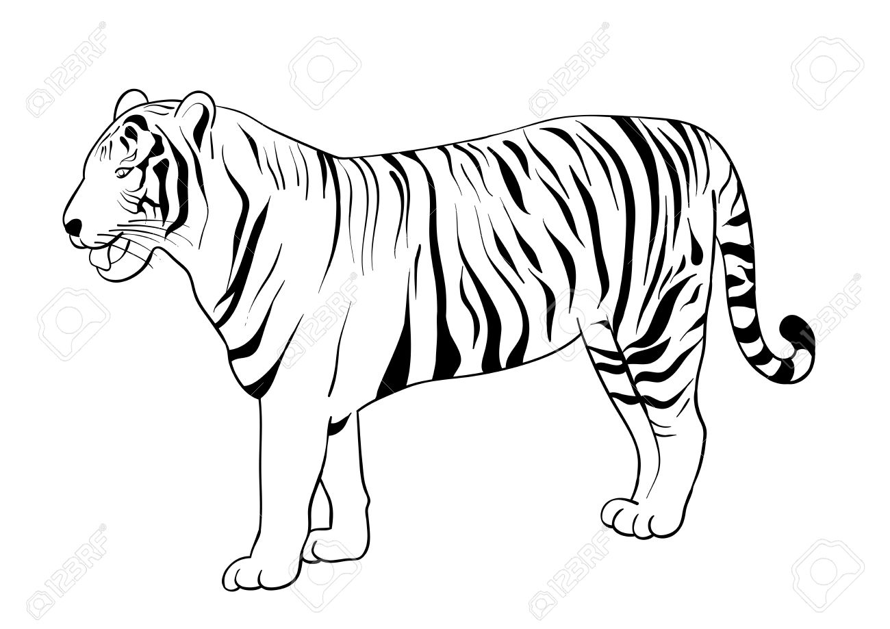 Black Silhouette Of Tiger Isolated On The White. Royalty Free.