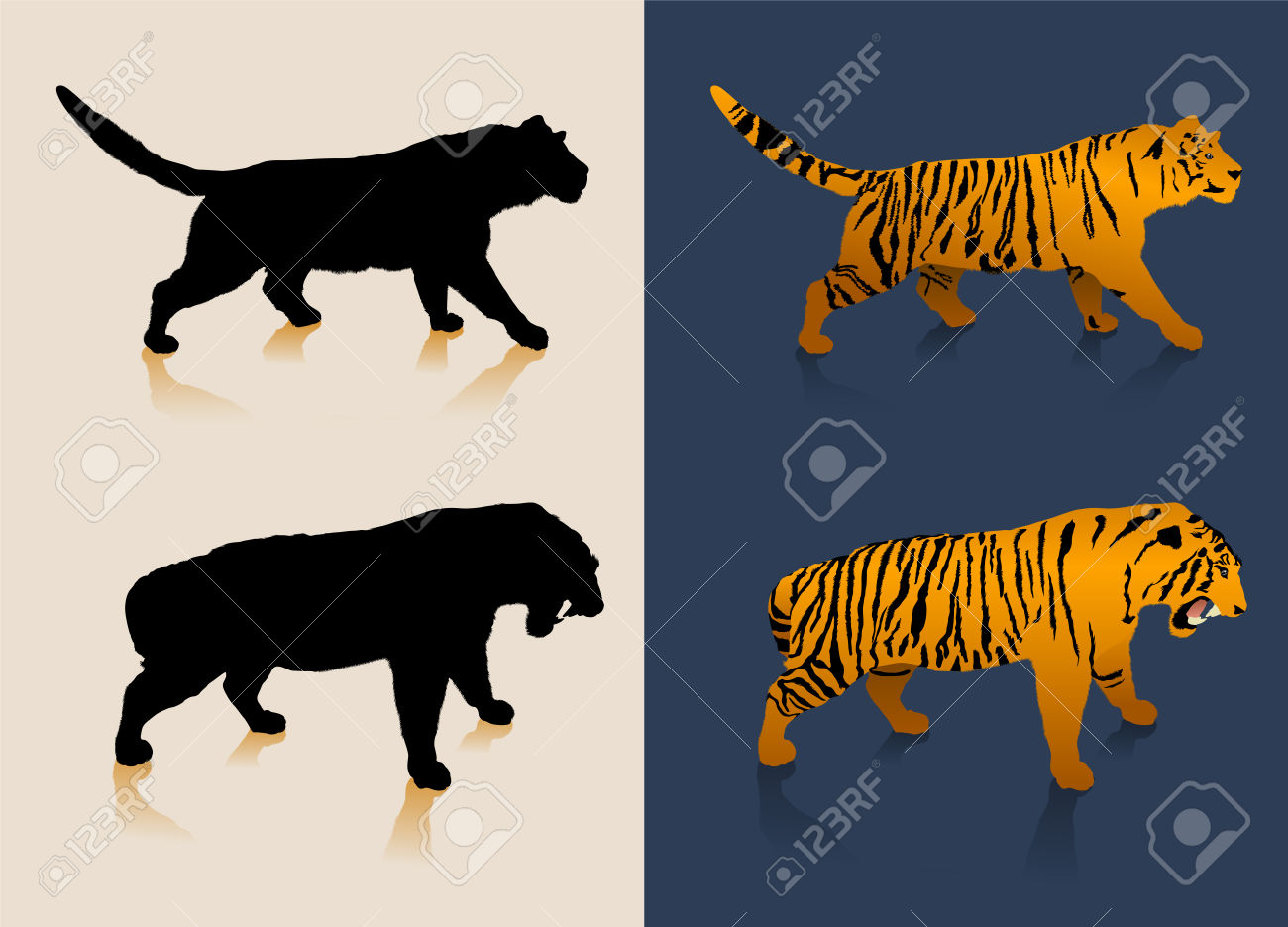 Black And White Tiger Silhouettes And Color Images Royalty Free.