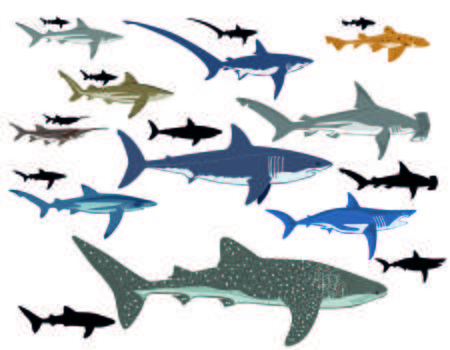 433 Tiger Shark Stock Illustrations, Cliparts And Royalty Free Tiger.