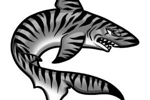 Tiger shark clipart 7 » Clipart Station.