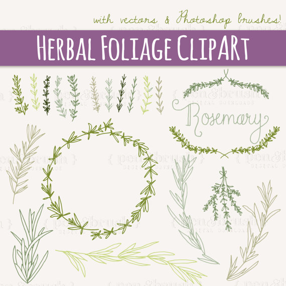 CLIP ART: Rosemary Sprigs // Photoshop Brushes // Hand Drawn.
