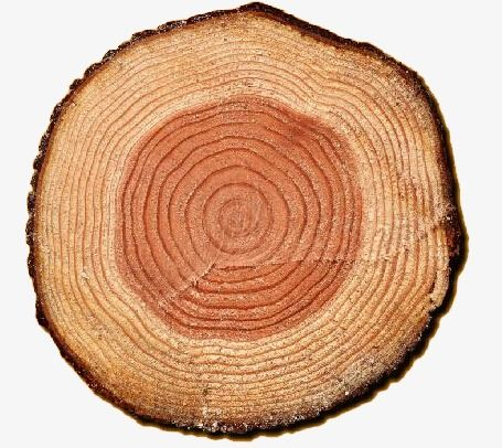 Tree Ring, Tree Clipart, Rings PNG Transparent Clipart Image.