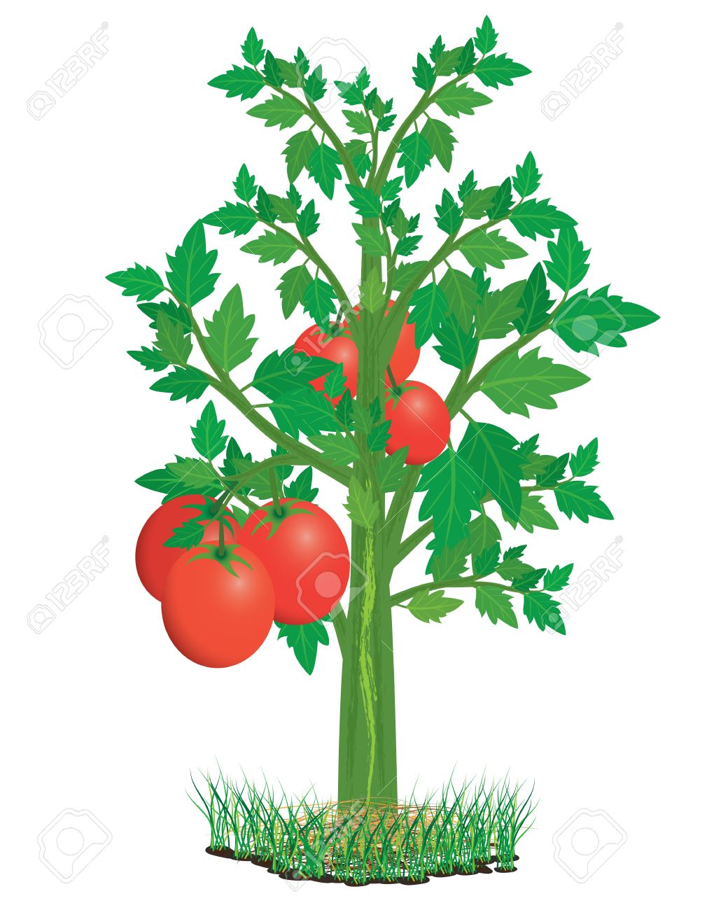 Collection of 14 free Tomatoes clipart tomato seedling aztec clipart.