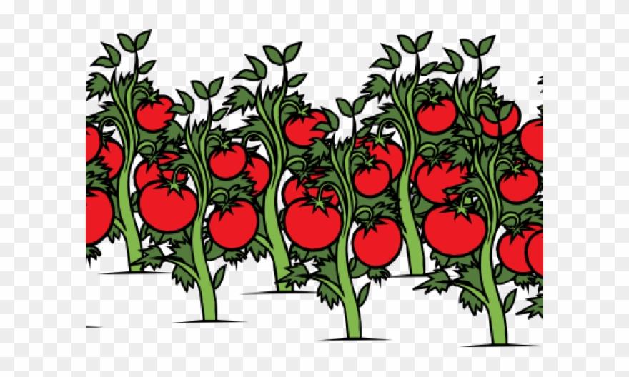 Tomato Clipart Tomato Stem.