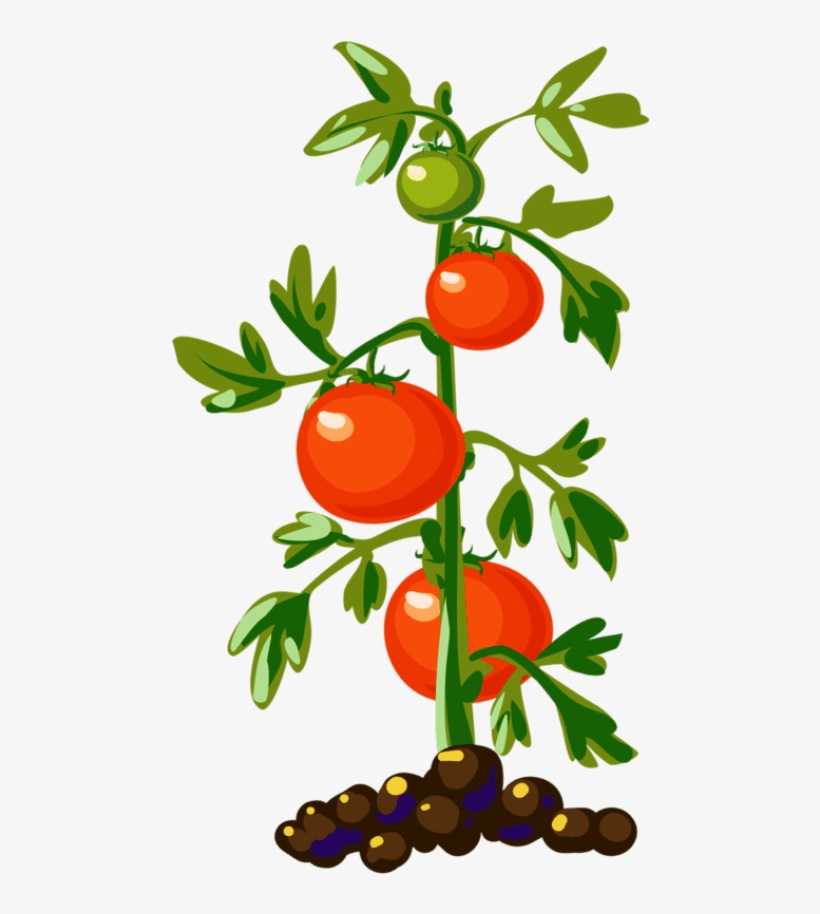 Tomato Plant Png (+).
