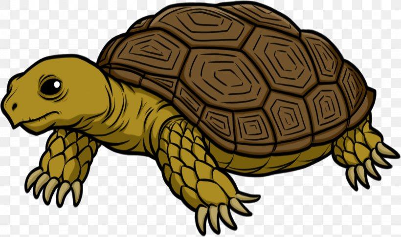 Turtle Tortoise Clip Art, PNG, 2051x1214px, Turtle, Box.