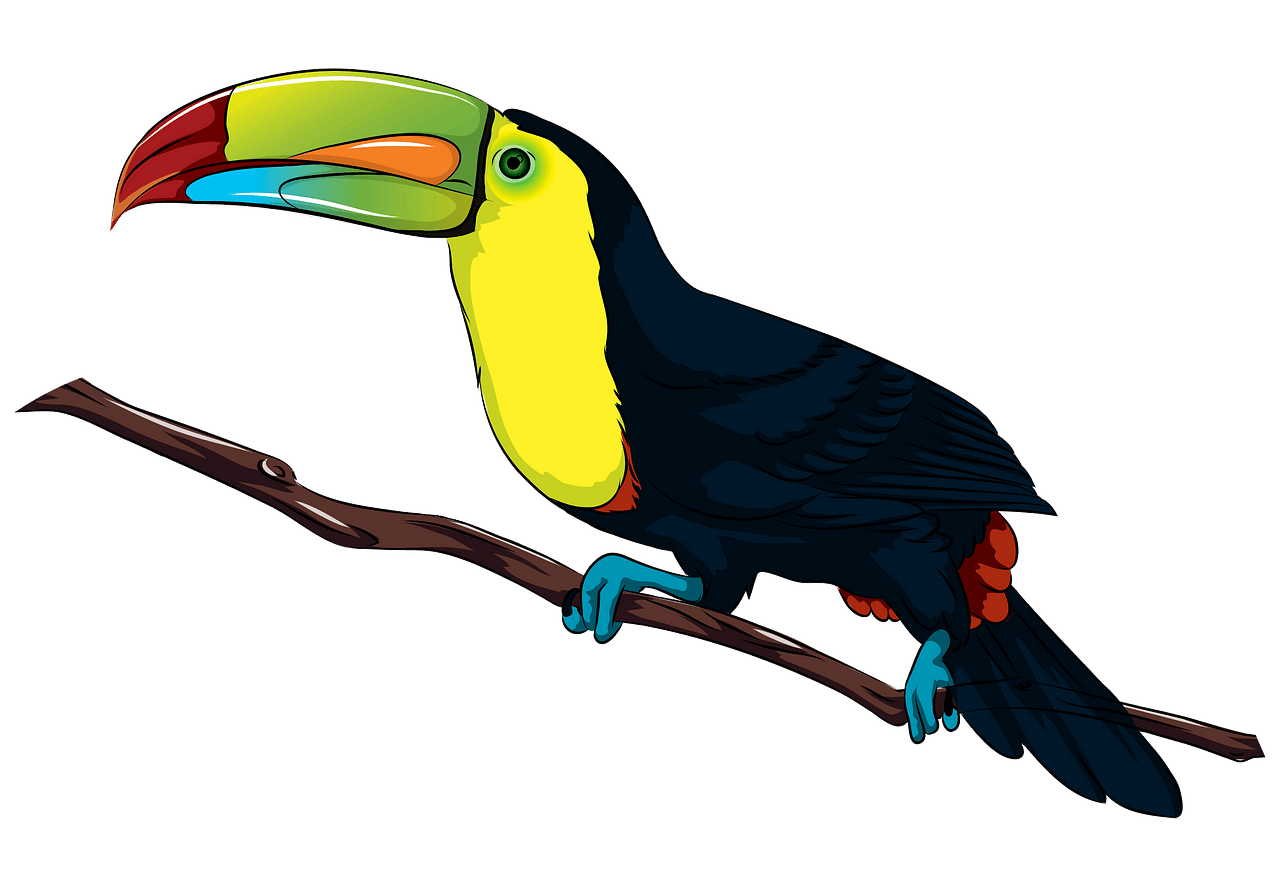Toucan clipart. Free download..