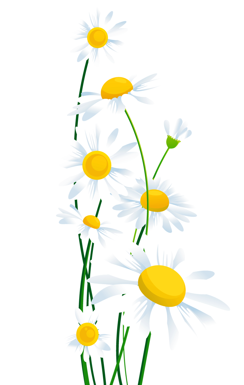 Flower clipart transparent background 3 » Clipart Station.